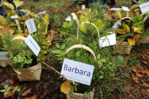 Warsztaty: O lesie w lesie 2016